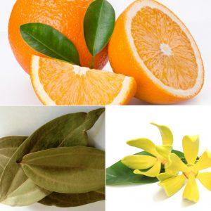 Sweet Orange, Ylang Ylan & Cinnamon Leaf