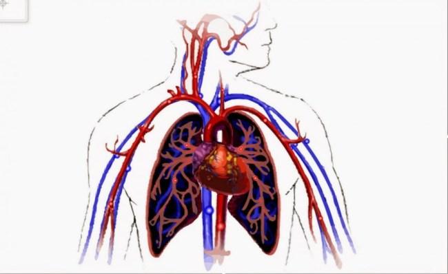 Manfaat Positif Daun Seledri Aliran Darah Lancar