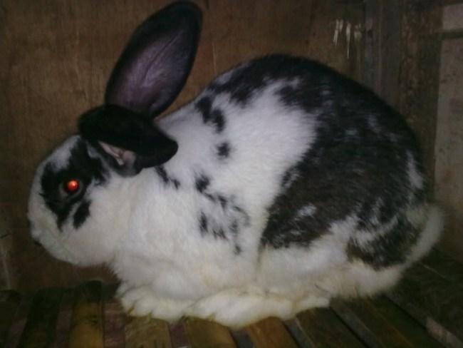 rabbits-box.blogspot.com