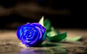 7 Arti Mawar Biru yang Bisa Mewakili Perasaan Kamu