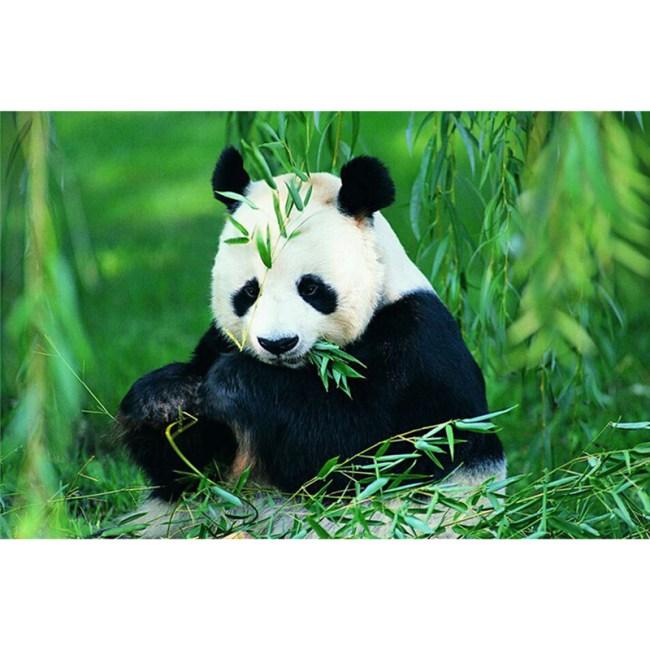 panda lucu