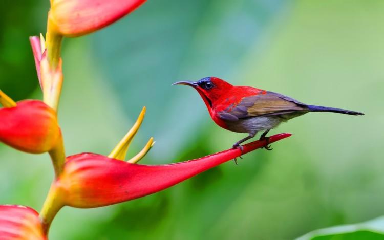 Macam-macam Jenis Burung Kolibri Beserta Gambarnya Lengkap!