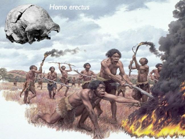Jenis Manusia Purba di indonesia