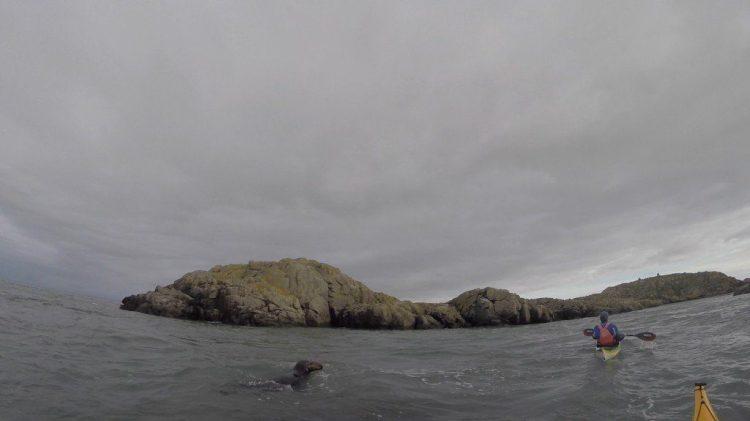 Phil's stalker seal