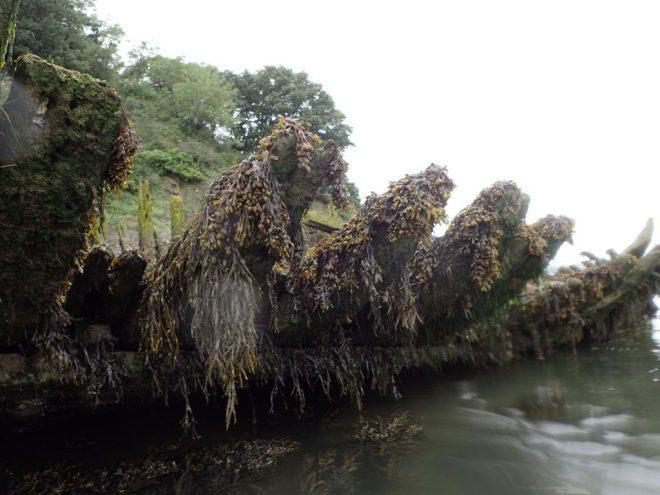The slowly rotting carcass of a ship