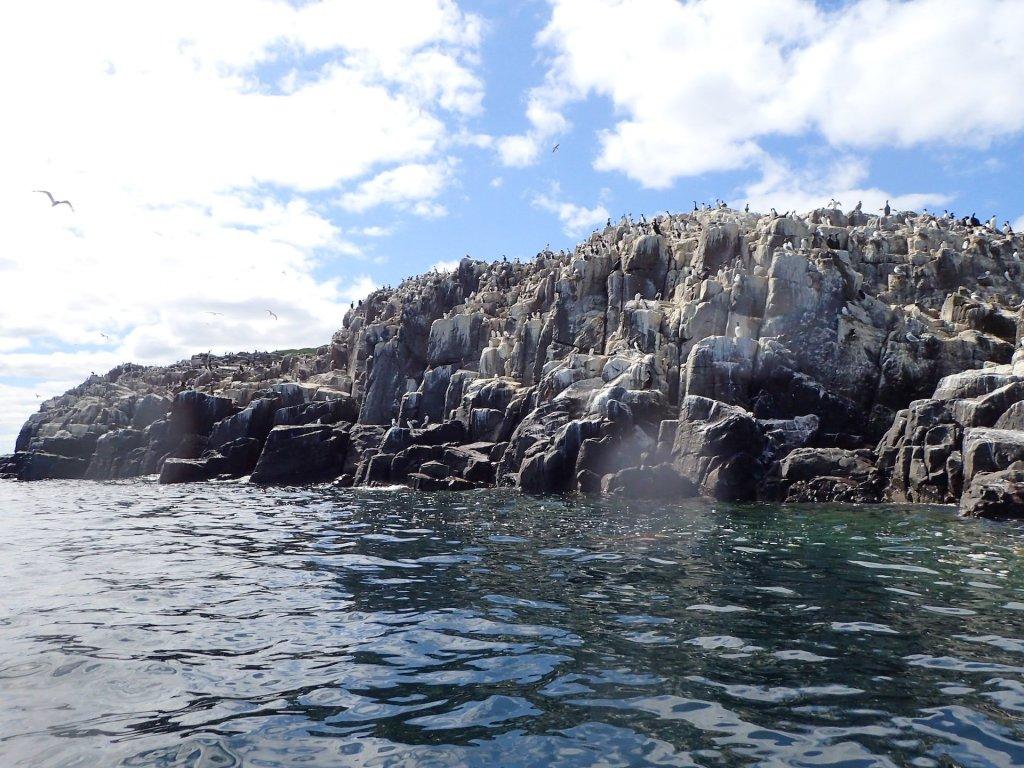 Nesting cliffs