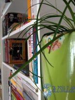 """Bücheregal von das A&0 mit Pflanze und Blick auf """"Trainspotting"""""""