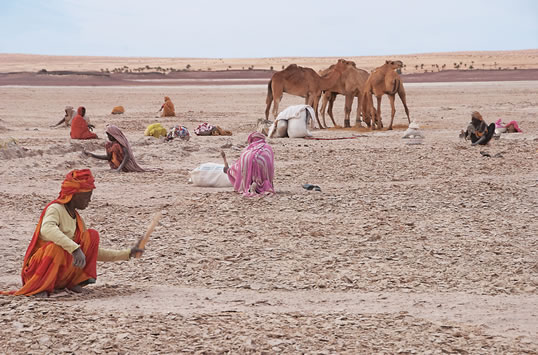 On the ancient lakebeds near Tichit, both men and women work to break up the salty surface crust. They bag it, load it onto camels and market it to caravanners who in turn sell it to herders as an animal-feed supplement.