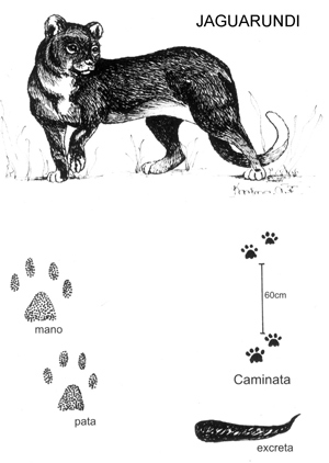 The Primavera Forest Animal Guide: Mammals of El Bosque La