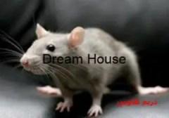 دعاء لطرد الفئران للتخلص من مشكلة الفئران بأسرع وقت