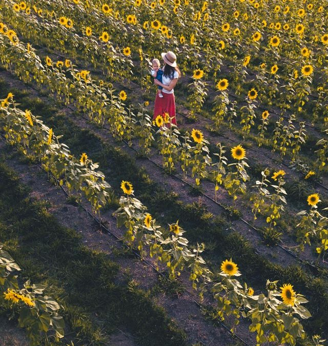 Sault's Seasonal flower fields