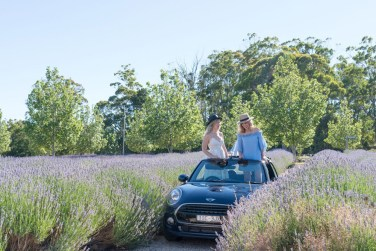 adventures_of_2_girls_in_a_mini_lavender3
