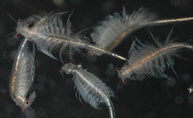 Bio385 Arthropoda Crustacea