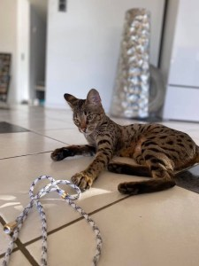 Niereninsuffizienz bei Katzen vermeiden