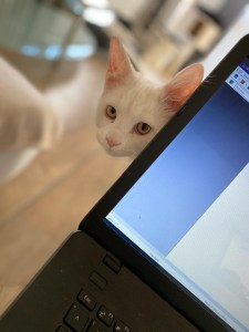 Katzenkrankheit Giardien