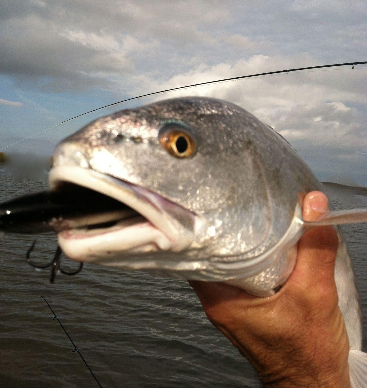 Savannah fly and light tackle for Flying fish savannah ga