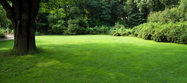 organic lawn care savatree