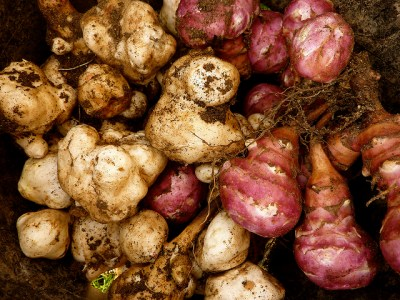 légumes anciens topinambour save eat