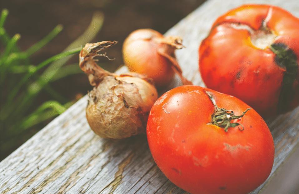 tomates rouges qui germent save eat