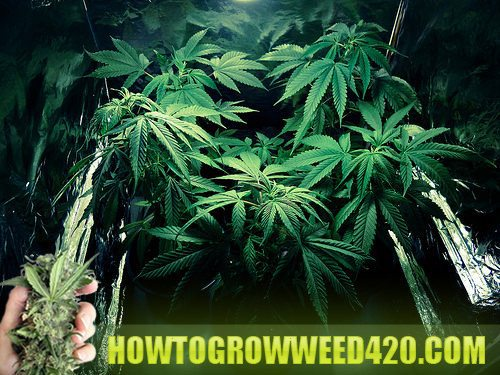 Terra weed discount coupons