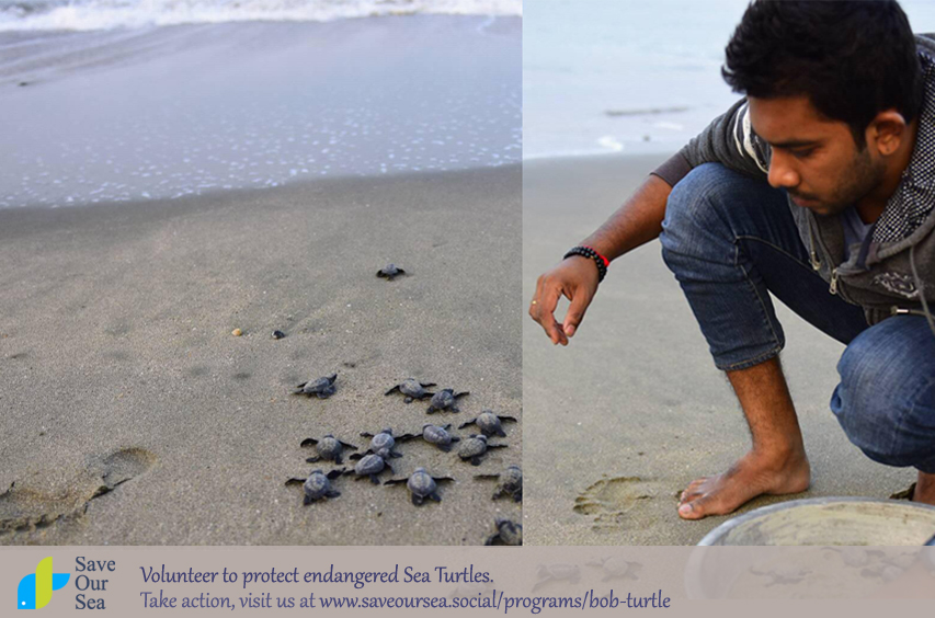Season's first baby sea turtles released into the bay