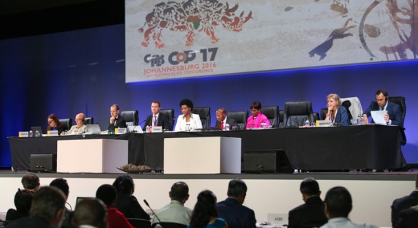 If CoP17 adopts several proposals by shark advocates, the number of CITES protected species available in Bangladesh' water will stand at ten.
