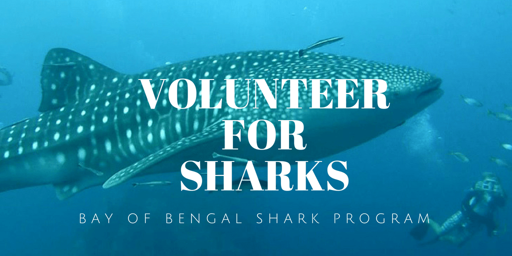 Apply to join Bengal Shark Program