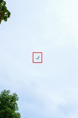 Kamera Megapixel besar Sampel Foto