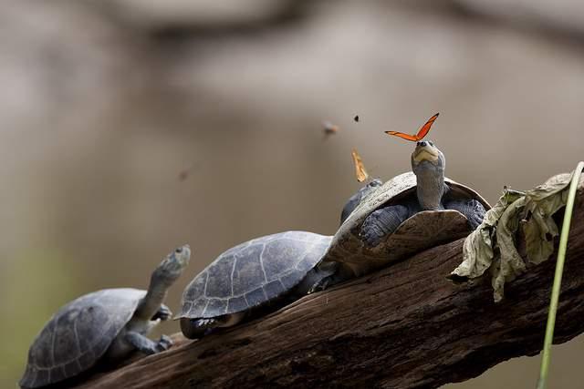 kura-kura dan kupu-kupu