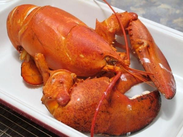 Christmas-Feast-2013-Lobster-Food