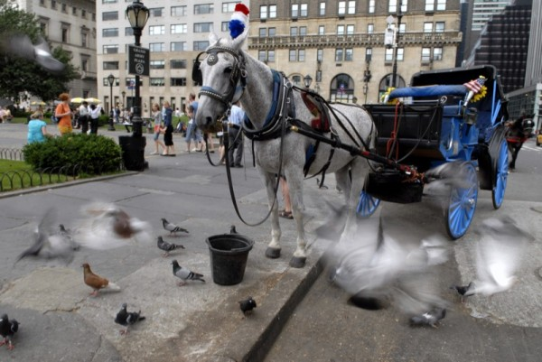 Photograph-Horse-New-York-City-Carriage-Travel