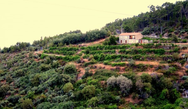 Photograph-Portugal-Travel-Farmer-Home-Hillside