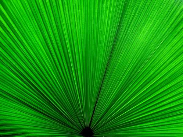 Photograph-Zen-Singapore-Nature-Eco-Friendly-Green-Broad-Leaf