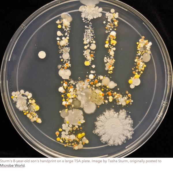 bacteria-handprint-upworthy