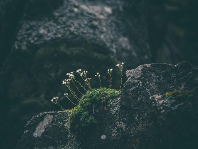 nature-zen-flower-rocks