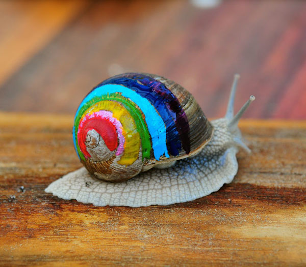 snail-shells-decoration-art