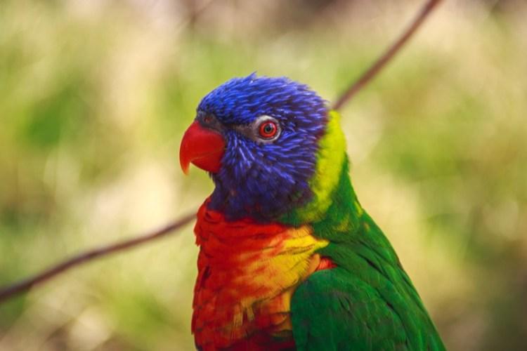 zoo-parrot-bird-animal