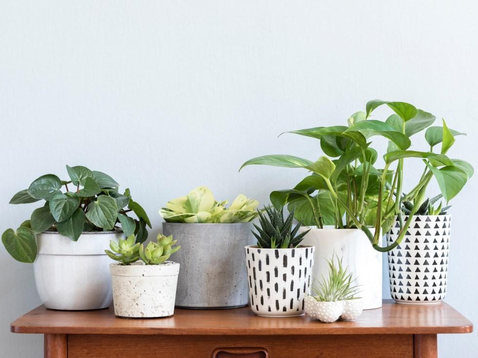 Kamerplanten in leven houden