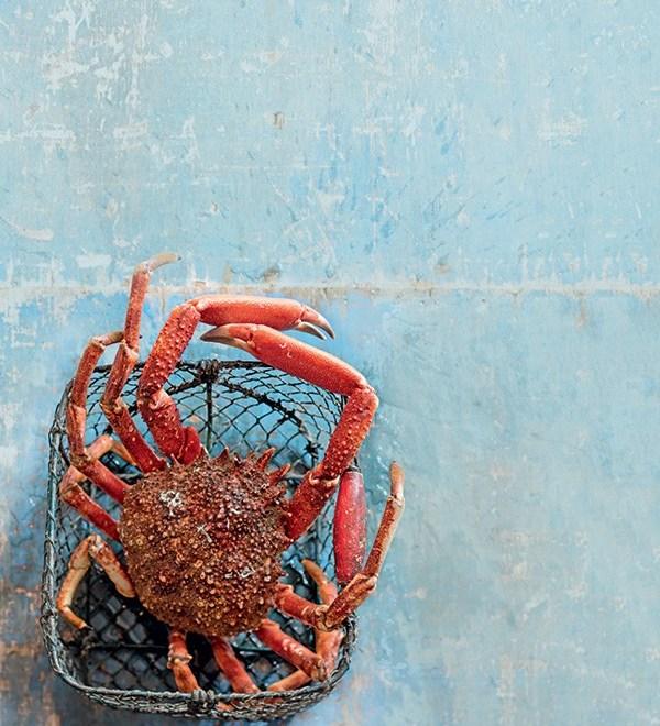 Araignée de mer : comment la cuisiner ?