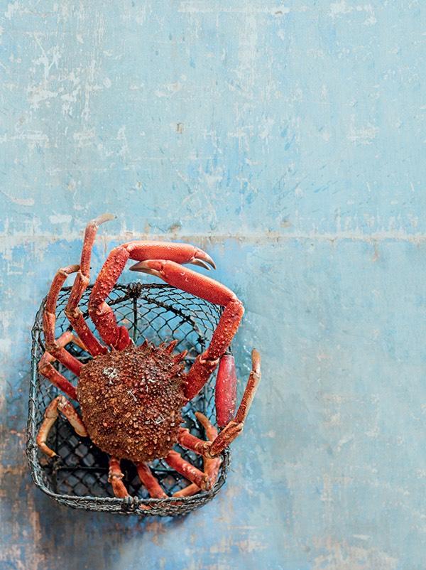 L'araignée de mer 3