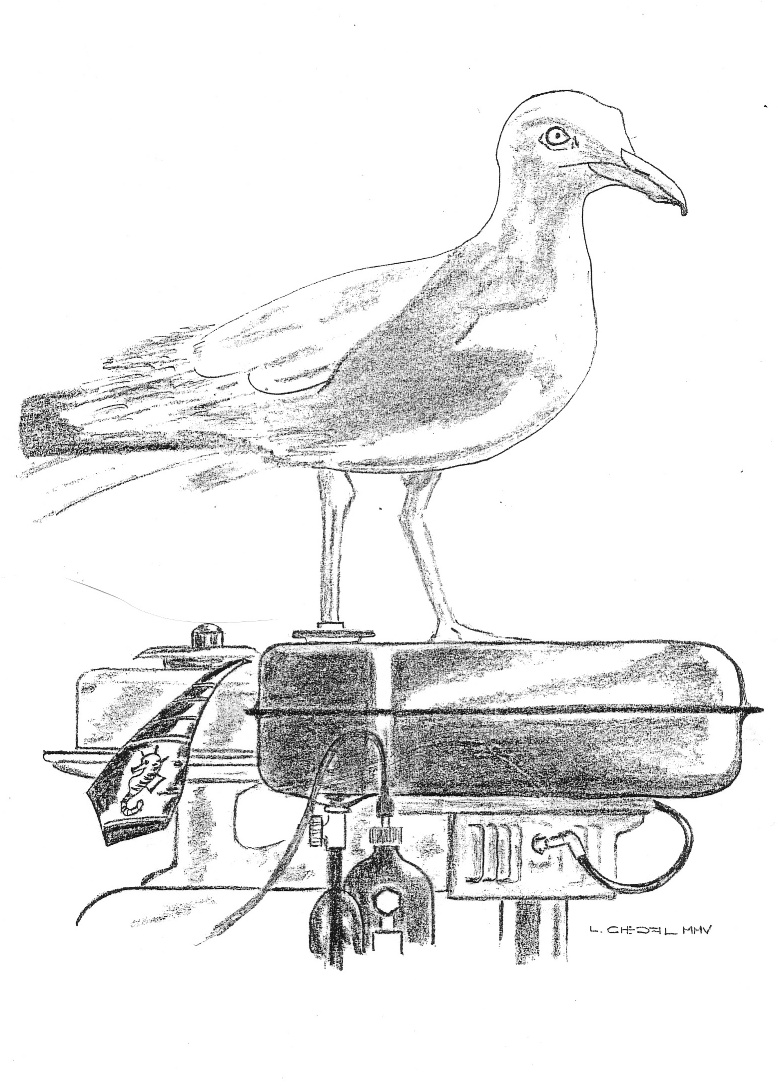 British Seagull news page with interesting snippets from