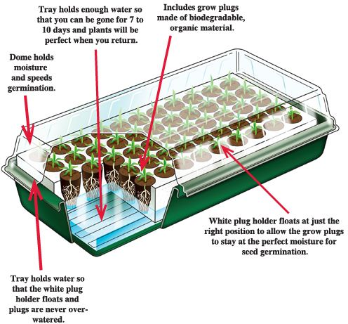 add a few packets of seeds and you are ready to roll for much less than if you were to buy established plants at about 3 a piece