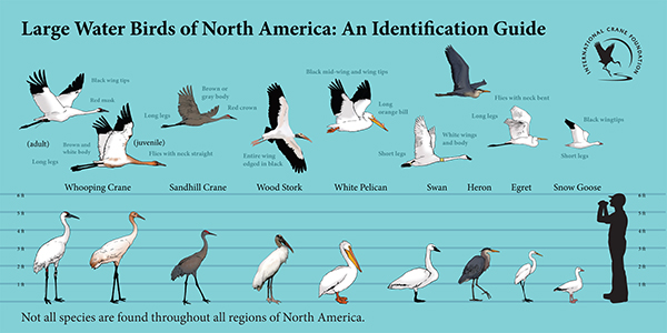 Birds Of Wisconsin Chart Otvod