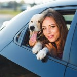 Does Car Insurance Cover For Pet Injuries Too?