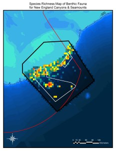 This map shows hot and cold spots for species of bottom-dwelling animals in the New England Canyons and Seamounts areas. Species are especially diverse along the edge of Georges Bank, where the shelf descends into the deep ocean. Hot spots are also visible on Bear, Physalia, Retriever and Mytilus Seamounts. Courtesy of Peter Auster and Michel McKee, Mystic Aquarium