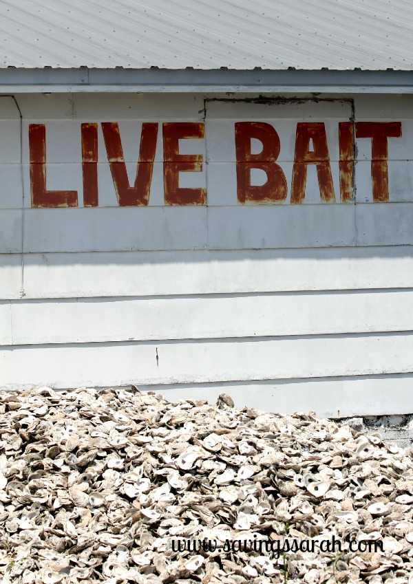 Live Bait, Dead Oysters