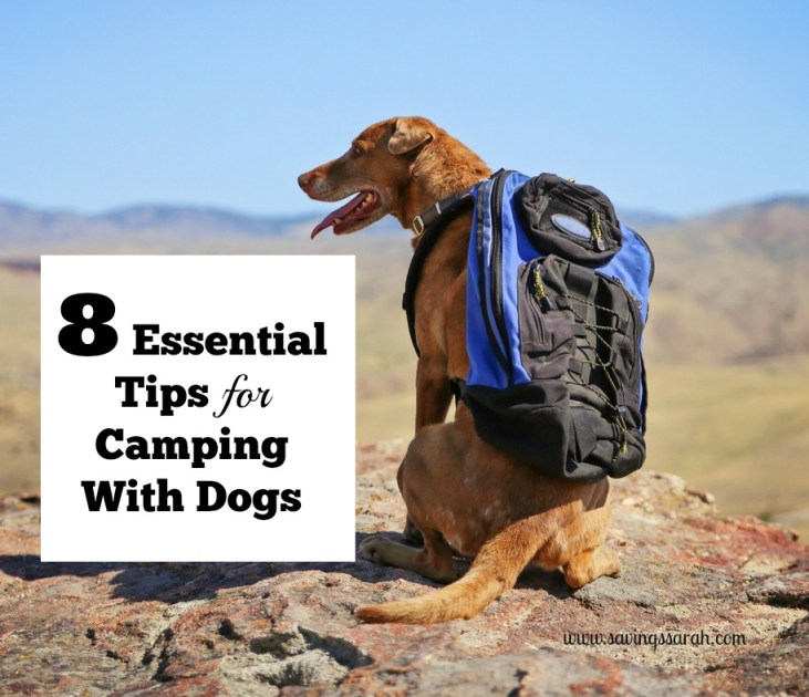 8 Great Tips for Camping with Dogs Today