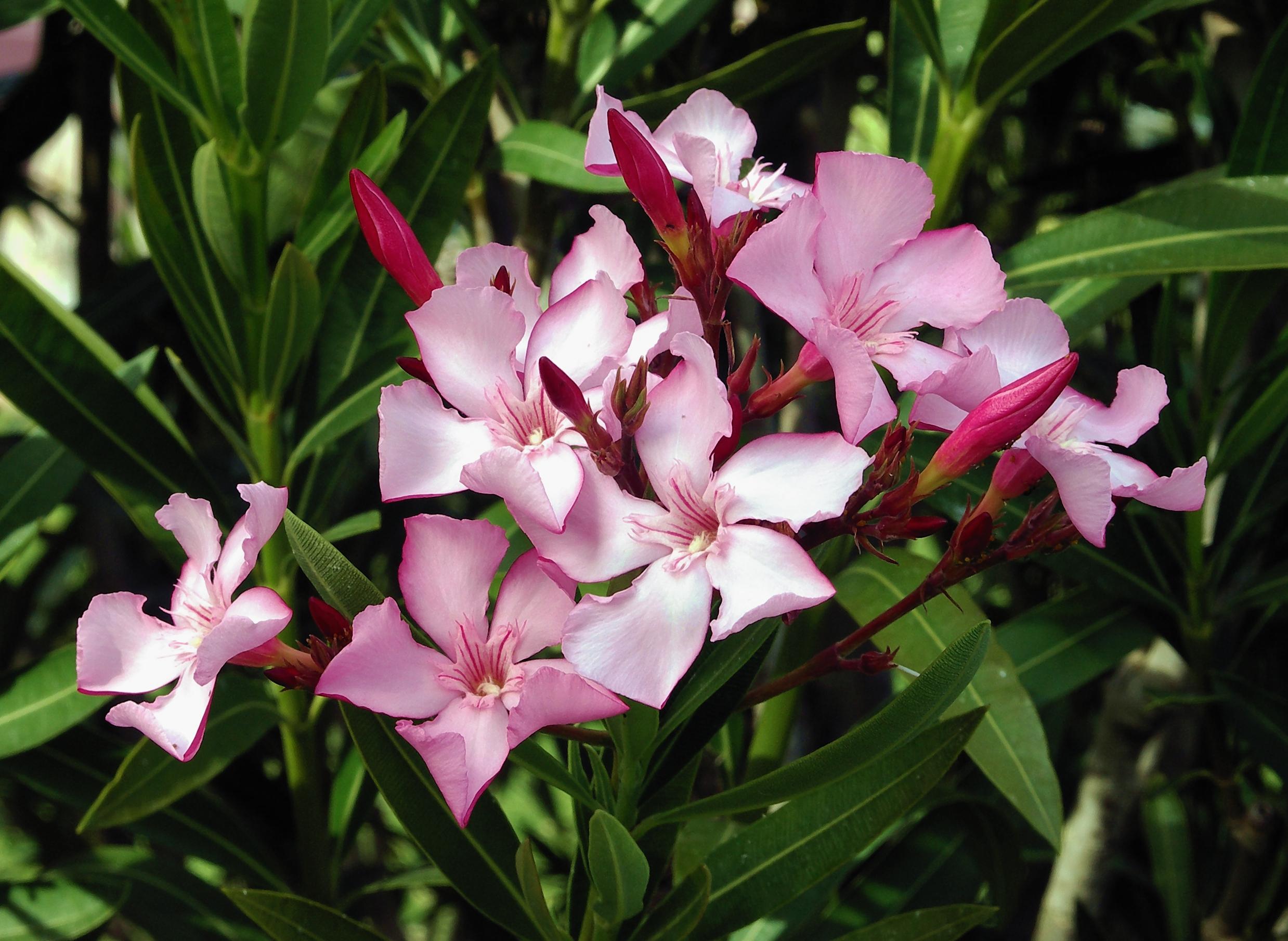 Jaipurs Flowering Shrubswhats Blooming At Savista Savista