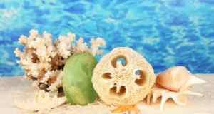 školjke u moru