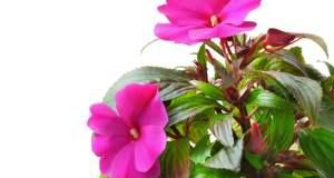 Savjeti za zalijevanje kućnog bilja